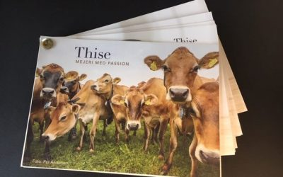 Thise Mejeri – økologisk og bæredygtigt