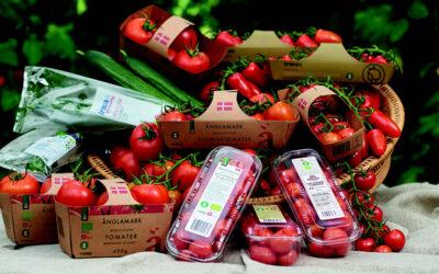 Markhaven: 35 års erfaring med økologisk tomatdyrkning